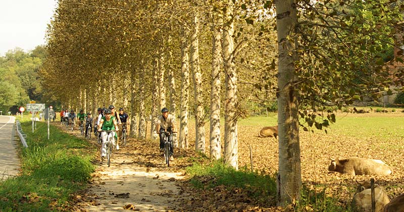 centre-logistic-bicicletes_4