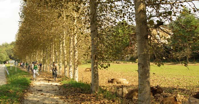 rutes-vies-verdes-carrilet-olot-girona_4