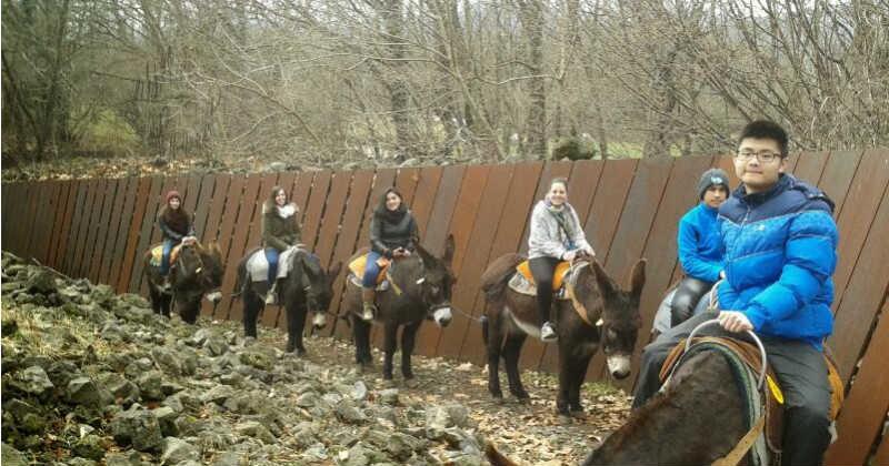 Pasejada de burros pel Parc de Pedratosca